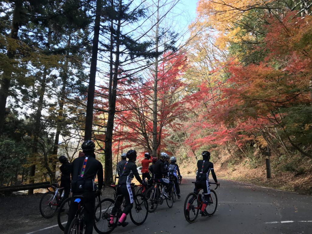 11月の自転車倶楽部♪