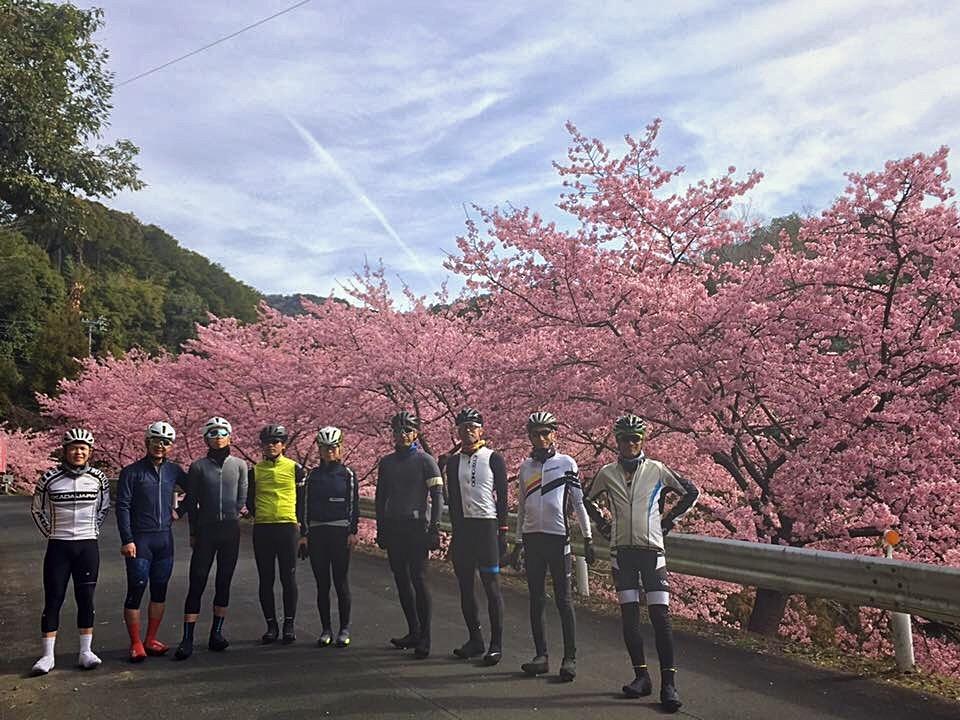 伊平の河津桜🌸